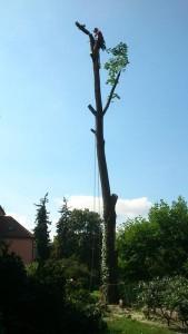 kácení stromu na zahradě