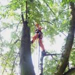 prořez stromu