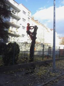 odřezávání větev