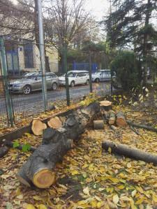 pořezané dřevo