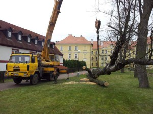 zbylý kmen stromu
