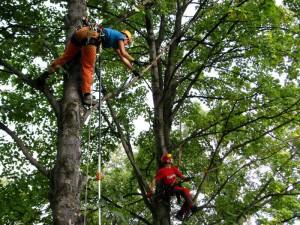 prořezávání stromu hostivice