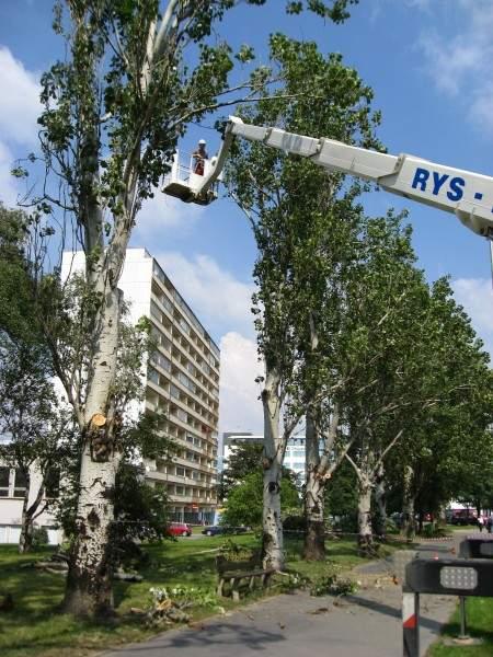 Prořezávání stromu z plošiny