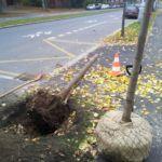 odstranění poškozeného stromu