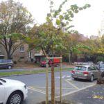 strom po výsadbě