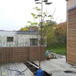výsadba stromu do terasy 3
